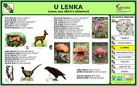 U Lenka